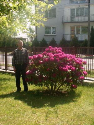 Czytaj więcej: Krzewy zdobiące otoczenie naszej szkoły