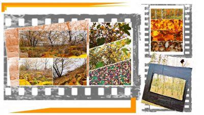 b_400_400_16777215_00_images_stories_zzycia_akcje_jesien7a_001.jpg